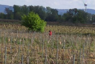 vinhateiro 2